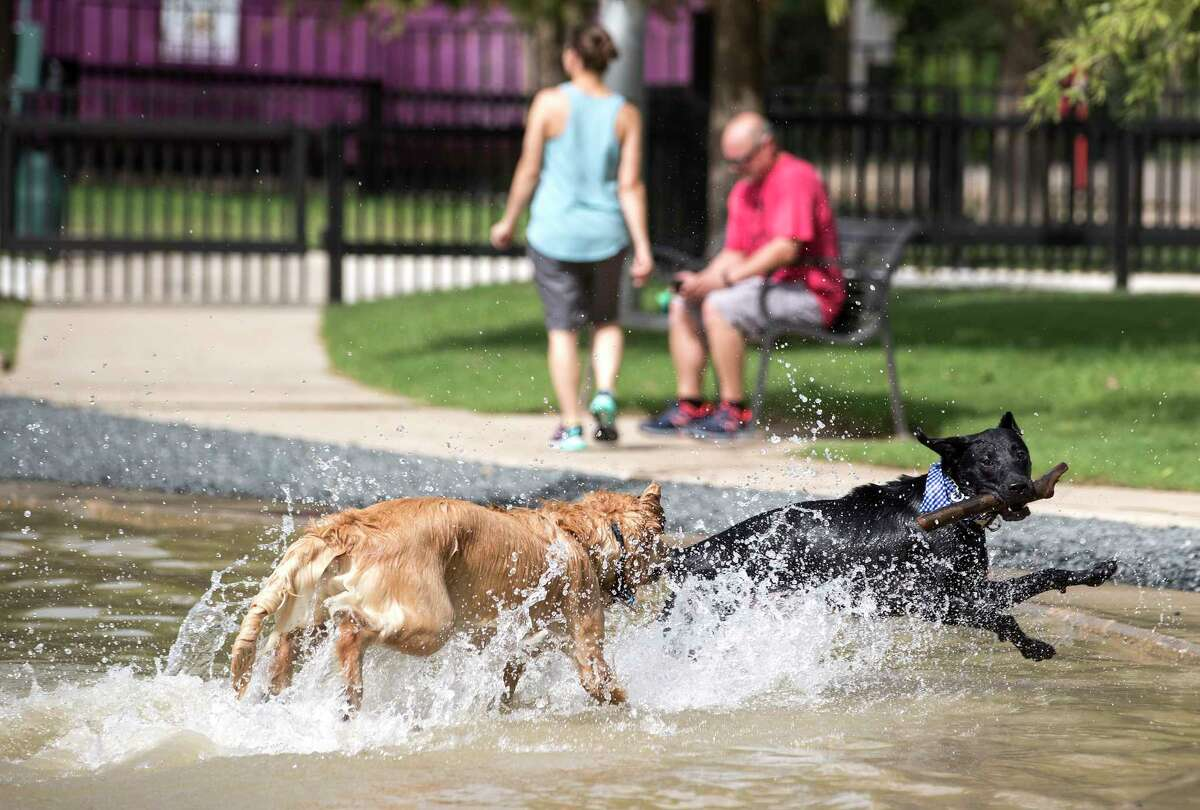 David Camp's dog, Lewis, right, plays with Rachel Johnson's dog, Louie, at Johnny Steele Dog Park on Monday, June 11, 2018, in Houston. The park, which was heavily damaged by Hurricane Harvey, reopened for the first time since the storm.