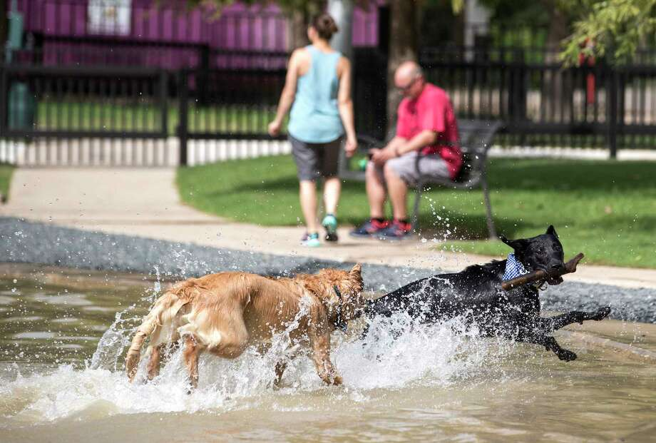David Camp's dog, Lewis, right, plays with Rachel Johnson's dog, Louie, at Johnny Steele Dog Park on Monday, June 11, 2018, in Houston. The park, which was heavily damaged by Hurricane Harvey, reopened for the first time since the storm. Photo: Brett Coomer, Houston Chronicle / © 2018 Houston Chronicle