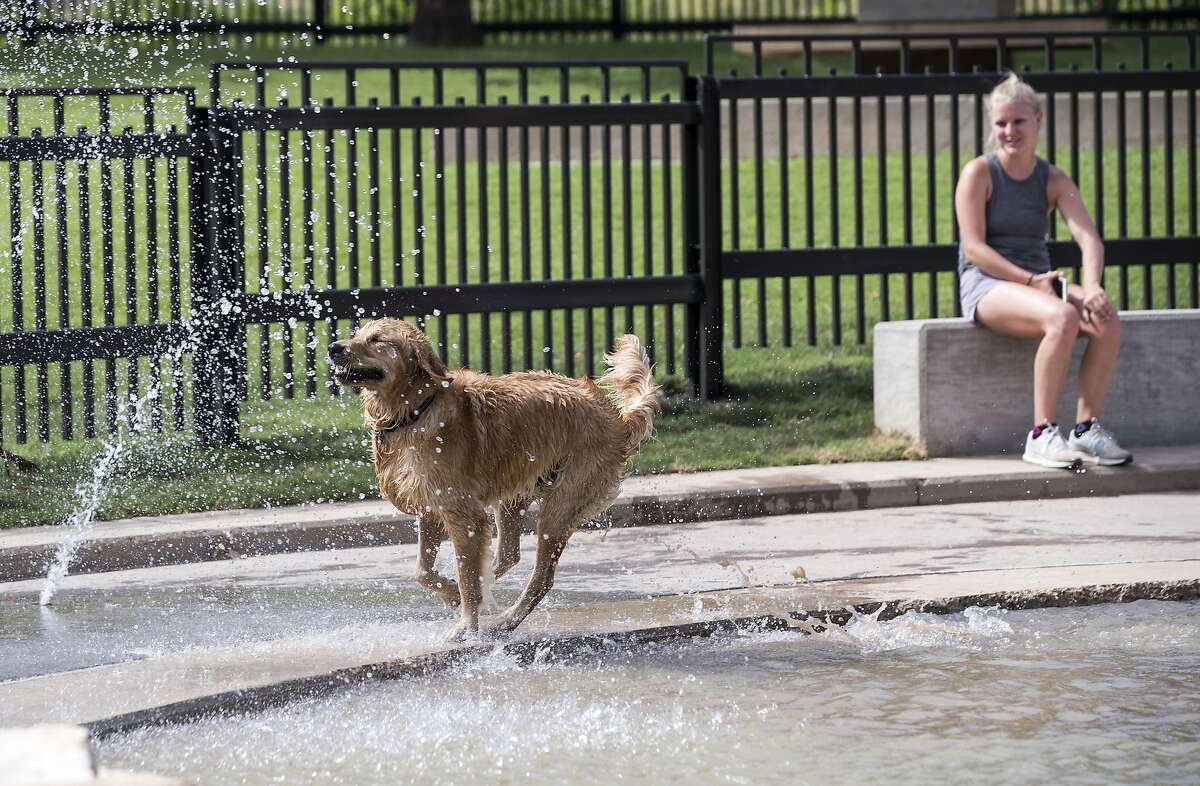 Houston ranked no. 35 in the nation of most pet friendly cities.  >>>Click through the slideshow to see why Houston didn't rank as high as other Texas towns.  Rachel Johnson watches her dog, Louie, play at Johnny Steele Dog Park on Monday, June 11, 2018, in Houston. The park, which was heavily damaged by Hurricane Harvey, reopened for the first time since the storm. ( Brett Coomer / Houston Chronicle )