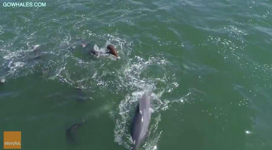 Monterey Bay Whale Watch Photo: Monterey Bay Whale Watch