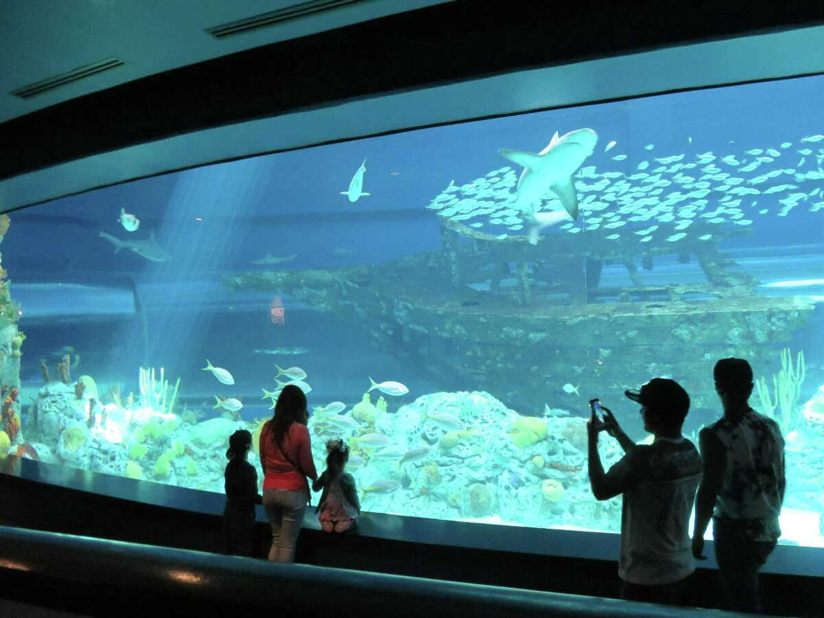 Sharks can be found in both the Gulf of Mexico exhibit and the newer Caribbean Journey Exhibit at the Texas State Aquarium in Corpus Christi. Islands of Steel show an underwater marine habitat on the Gulf of Mexico side and the H-E-B Caribbean Sea exhibit includes a replica of a shipwreck.