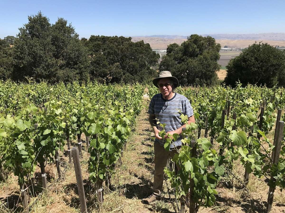 Randall Grahm stands among Pinot Noir vines at Popelouchum, his experimental vineyard in San Juan Bautista.