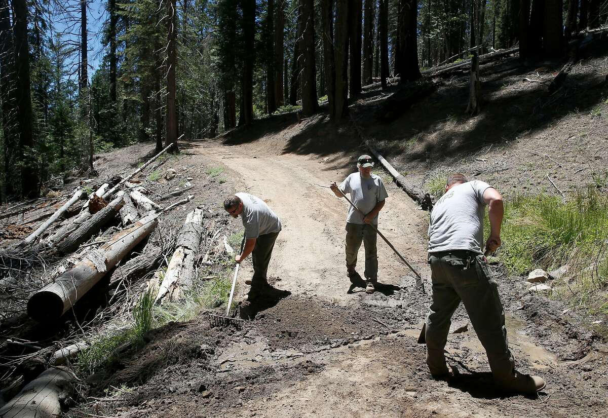 Park service employees complete final trail maintenance work at the Mariposa Grove in Yosemite National Park on Tuesday, June 12, 2018. The grove of giant sequoias reopens to the public on Friday after a three-year renovation project.