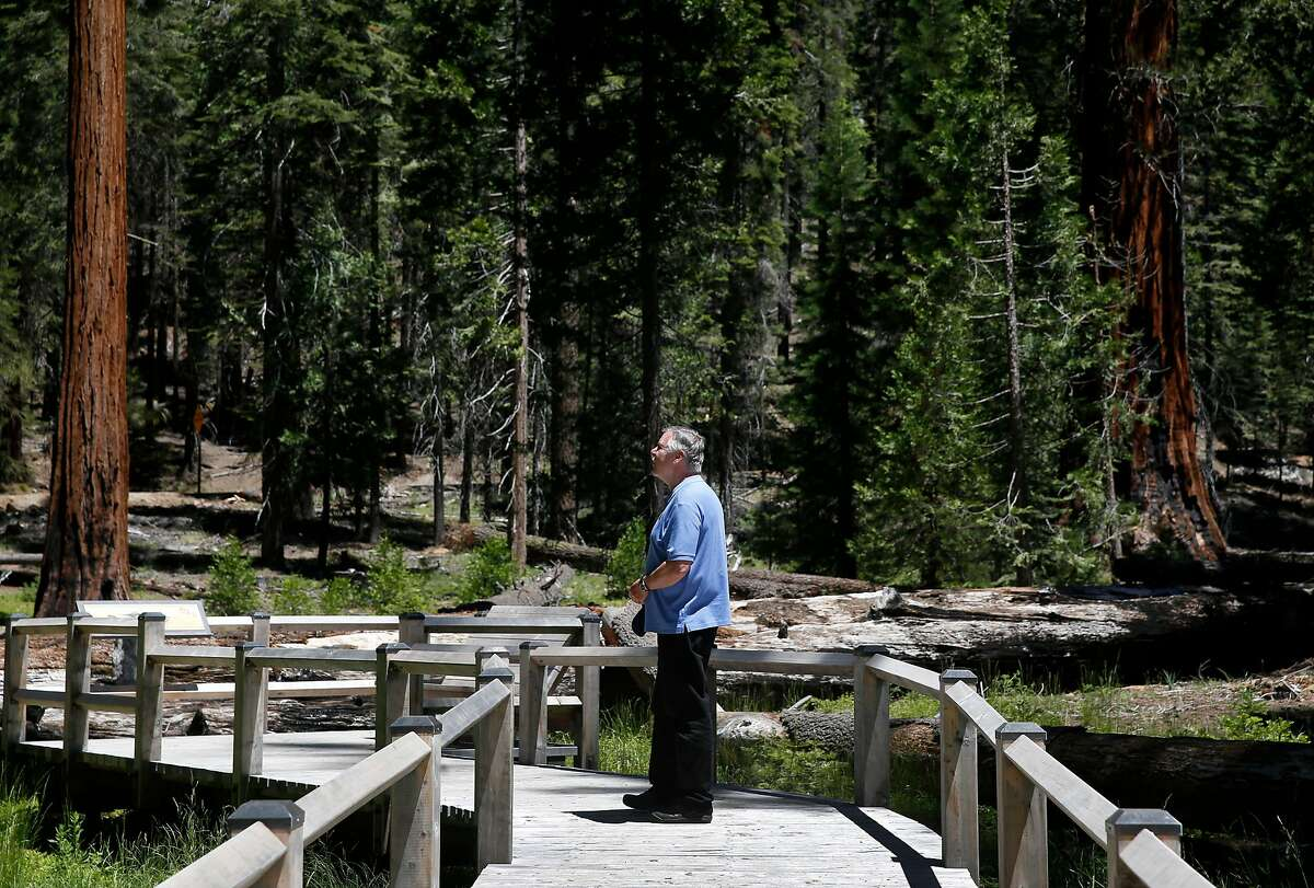 Yosemite Conservancy president Frank Dean stops to view giant sequoias while walking on the new boardwalk trail at the Mariposa Grove in Yosemite National Park on Tuesday, June 12, 2018. The grove of giant sequoias reopens to the public on Friday after a three-year renovation project.