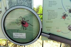 A view of the tick information board at the Albany Pinebush on Monday, May 21, 2018, in Albany, N.Y.    (Paul Buckowski/Times Union)