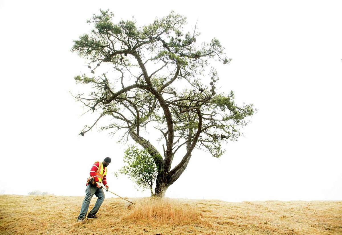 In preparation for fire season, Damion Bernard clears vegetation from Skyline Blvd. in Oakland on Tuesday, May 22, 2018. Contracted by the Oakland Fire Department, Bernard and his crew will spend several days working in the area.