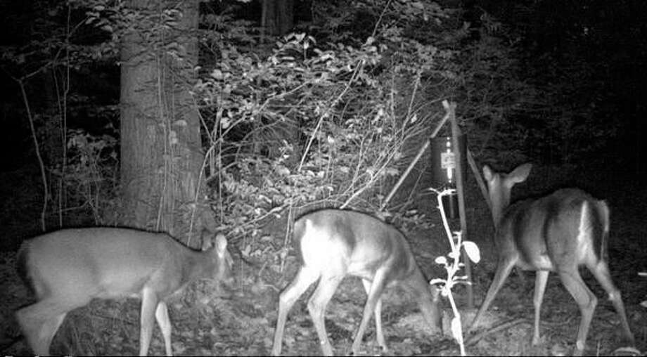 This file photo, captured by a game camera, shows three deer gathered at a mechanical feeder. If the Natural Resources Commission adopts recommendations from the DNR's Wildlife Division, which are to be presented as a non-action, 'for information' item at the commission's meeting today, scenes such as this one would be unlawful anywhere in the Lower Peninsula. (Steve Griffin/file photo for Hearst Michigan) / Copyright 2012