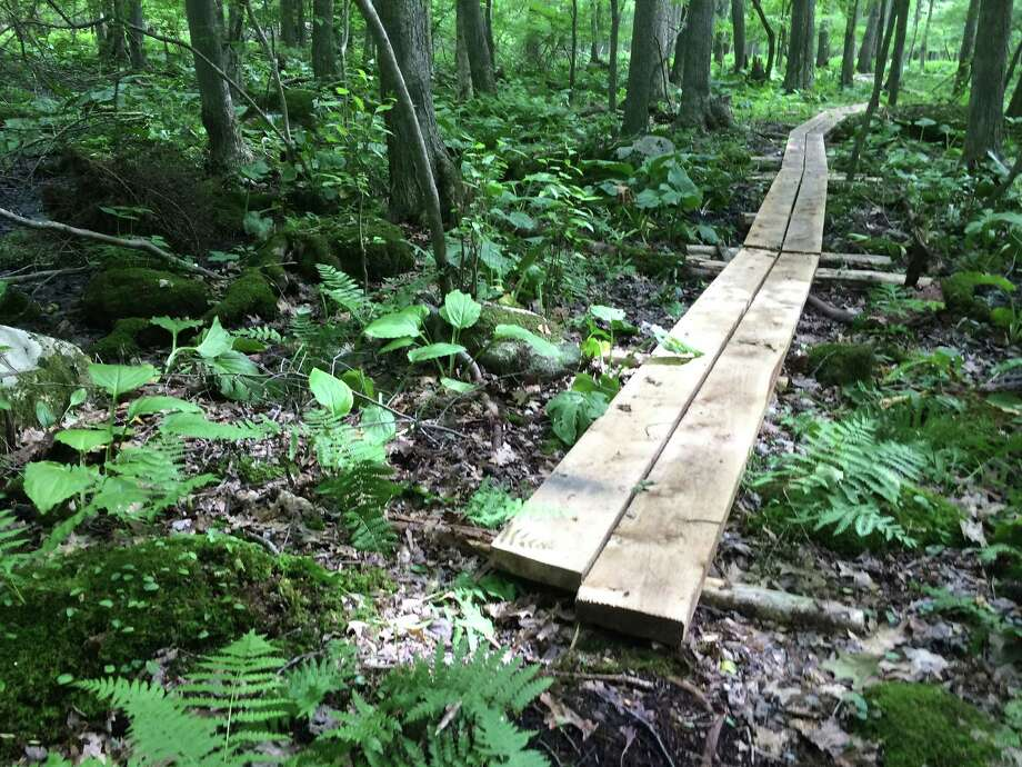 BOG WALK: Branford Land Trust will mark its 50th anniversary with a celebration that includes the dedication of the Red Hill Woods Bog Walk, a guided walk and a celebratory reception June 23 at 10:30 a.m. at the Red Hill Woods Preserve in Branford. In addition to celebrating 50 years of successful land conservation and community outreach by the BLT, the event presents the official unveiling of the 1,200-foot bog walk, constructed in 2017. Photo: Courtesy Of Jen Payne