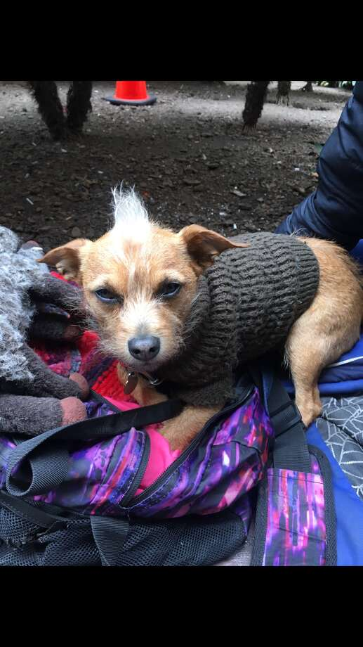 Video of fatal attack on tiny dog in SF leads to suspect's