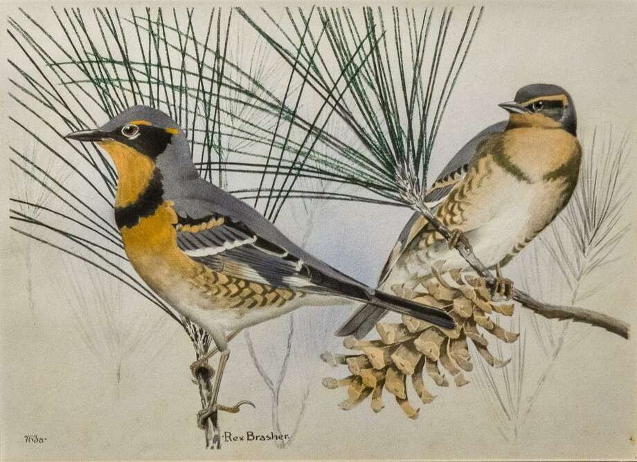 Kent Art Association board member Karen Chase will give the second in a series of lectures on Discovering Our Founders as part of the KAAs 95th Anniversary Celebration, on the artist Rex Brasher (1869-1960) who has been called Connecticut's Audubon. Photo: Contributed Photo /