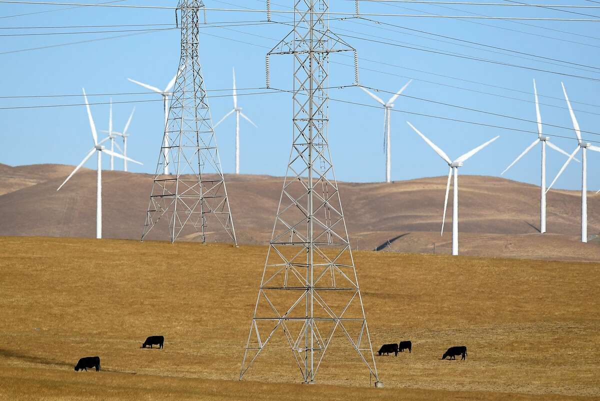 Cows graze below high tension power lines outside of Tracy, Calif., on Thursday June 14, 2018.