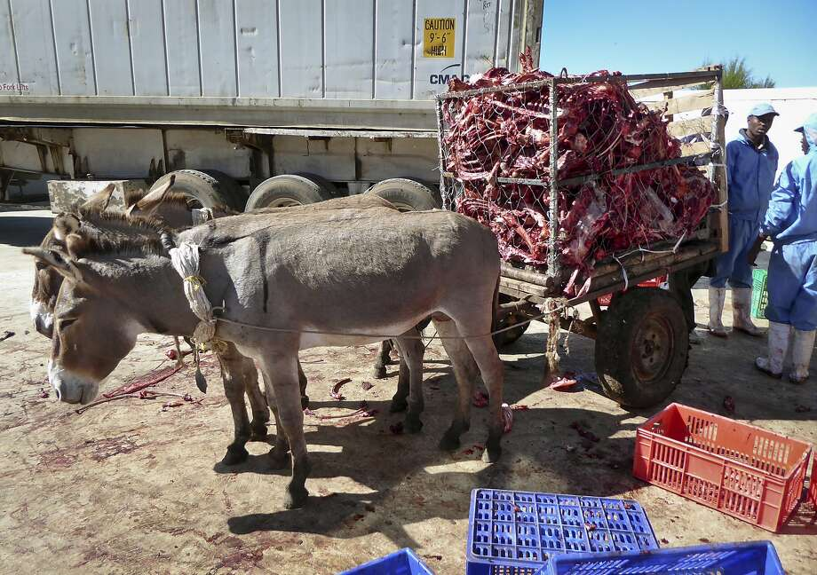 Donkeys pull a cart containing the carcasses of other donkeys, from a slaughter area to a dump site, in Naivasha, Kenya. Photo: Donkey Sanctuary Kenya 2017