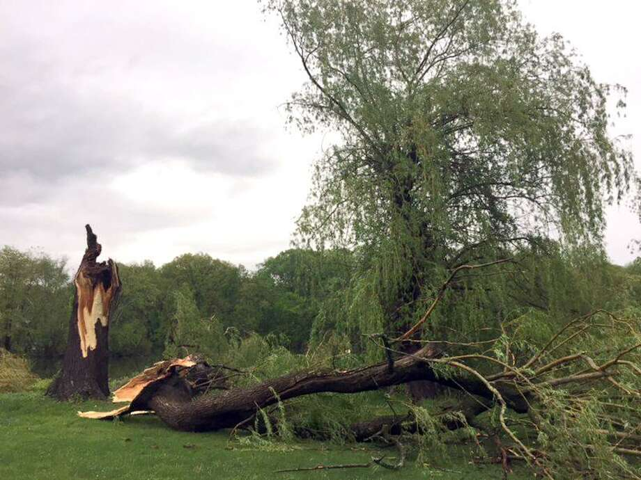 A Willow tree taken down by Tuesday's storm at Hatters Park in Danbury, May 15, 2018. Photo: Jean Dubail / Jean Dubail / The News-Times