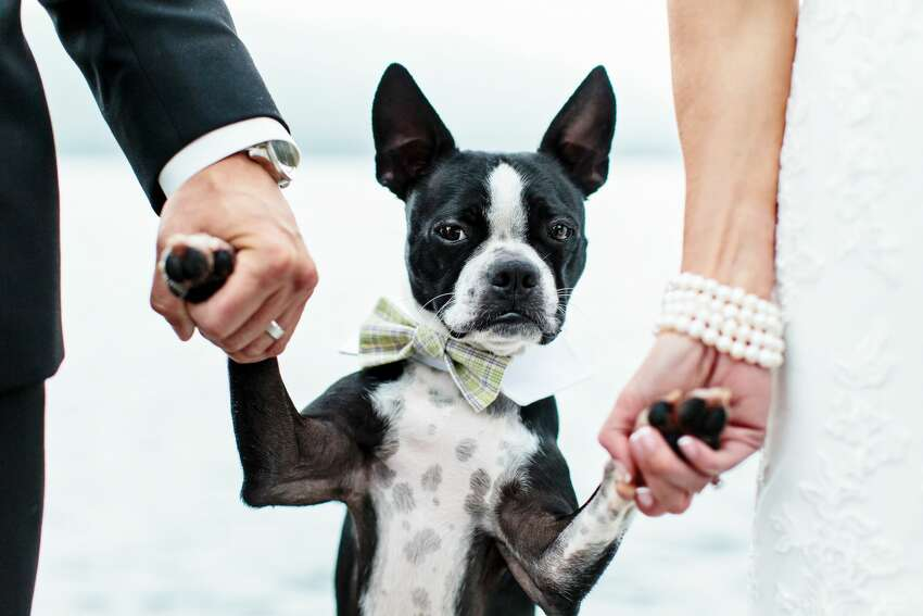 2, My puppy-whimpering noises are second to none! It is my go-to in grabbing the attention of dogs at weddings or engagement shoots!