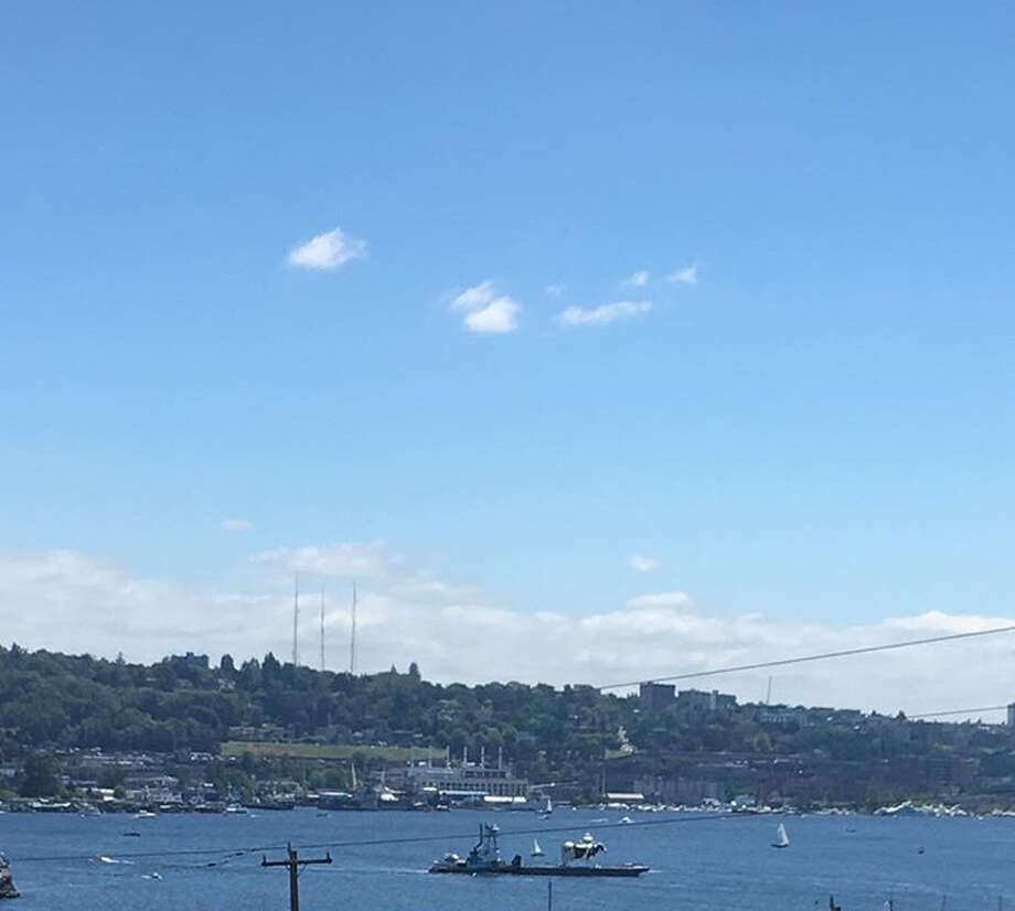 Why was this cow doing laps around Lake Union on Saturday? Photo: P-I