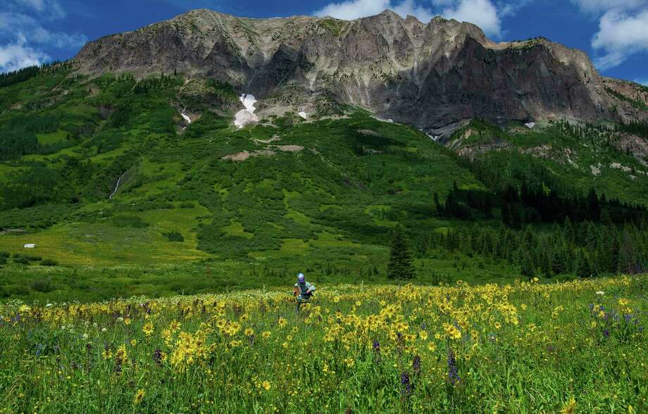 In this July 9, 2015 file photo, Cleo Whiting, of the Rocky Mountain Biological Laboratory in Gothic, Colo., researches bees in wildflowers, outside the town north of Crested Butte, Colo. In the Rocky Mountains, the first robins of Spring are arriving 10.5 days earlier in 2018 compared with 30 years ago. The first larkspur wildflower is showing up 8 days earlier and the marmots are coming out of hibernation five days earlier, according to seven-year averages at the Rocky Mountain Biological Lab. Photo: Christian Murdock, AP / The Gazette