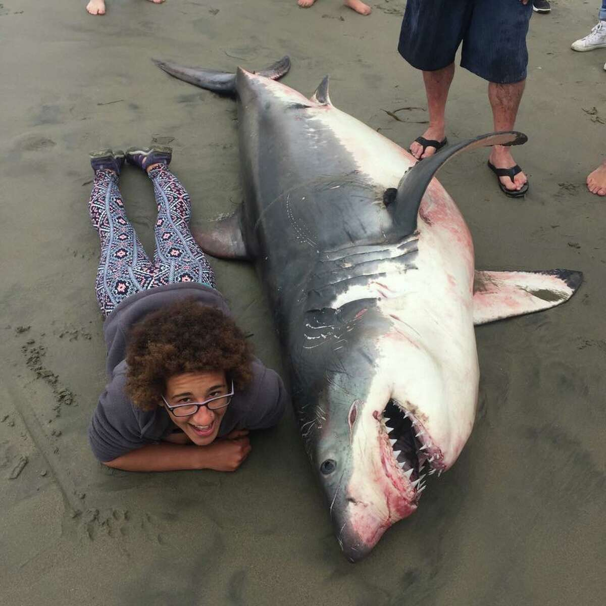 A marine biologist lies next to a dead shark washed up on a beach in Aptos, Calif., on June 17, 2018.