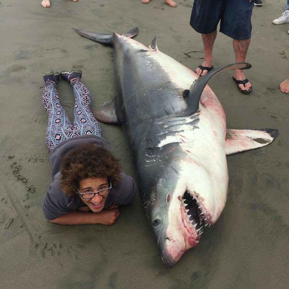 A marine biologist lies next to a dead shark washed up on a beach in Aptos, Calif., on June 17, 2018. Photo: Giancarlo Thomae