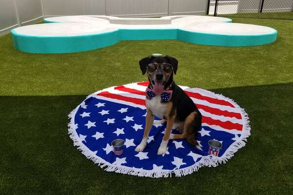 PetSuites of America, a pet lodging business, is opening its first Texas location June 30 near the San Antonio International Airport. (Courtesy of Pet Suites San Antonio)