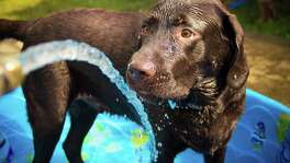A typical afternoon in the backyard can turn deadly in minutes if your dog doesn't have shaded protection or cool water to drink or lay in — like a baby pool.