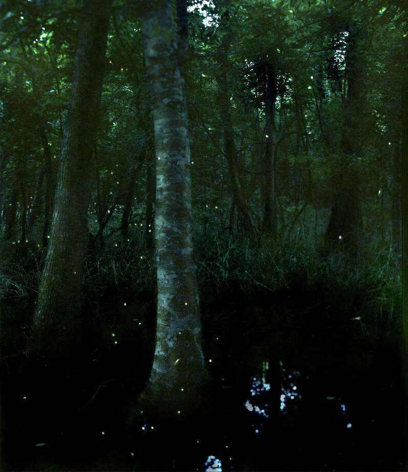 Chronicle reader Stephen DeHart submitted this photo of fireflies at Brazos Bend State Park. Photo: Stephen DeHart / Stephen DeHart