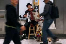 Robert Doerr plays an accordion with his dog, Vera, for commuters at the Civic Center/U.N. Plaza BART Station Tuesday.