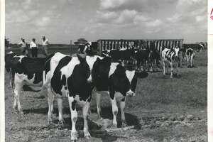 Cypress  Cattle, hot artesian well tourism Source:  Handbook of Texas Online /Texas State Historical Association