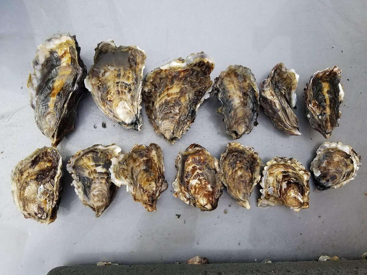 Oysters from Aqua Rodeo Farms.