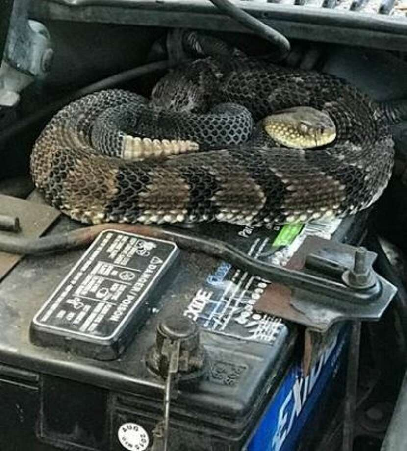 Strange Rattle In NY Man's Engine Was A Snake