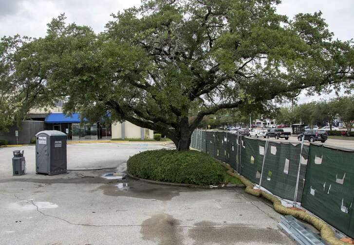 An oak tree memorializing Captain Herod was planted more than 50 years ago near the intersection of Beechnut Street and Endicott Lane, seen here Tuesday, June 19, 2018, in Houston.  ( Jon Shapley / Houston Chronicle )