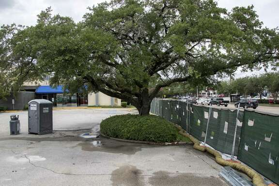 An oak tree memorializing Captain Herod was planted more than 50 years ago near the intersection of Beechnut Street and Endicott Lane, seen here Tuesday, June 19, 2018, in Houston.  ( Jon Shapley / Houston Chronicle )