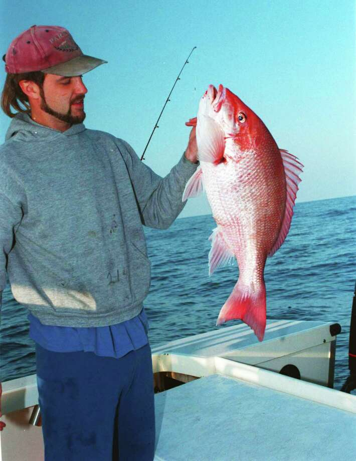This year's red snapper season for private-boat recreational anglers in federally-controlled waters of the Gulf of Mexico begins June1 and is predicted to run 82 days, the longest such season in more than a decade and almost twice as long as 2017's 42-day season. Photo: Shannon Tompkins / Houston Chronicle