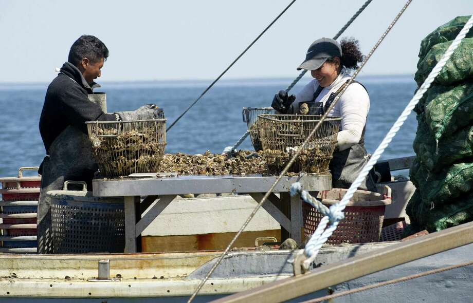 Jose Maldonado, left, and Pricilla Layana, right, sort oysters on board a boat in the Long Island Sound as they dredge them for Norm Bloom and Son in Norwalk, Conn., on Friday, May 17, 2013. Photo: Lindsay Perry / File Photo / Stamford Advocate