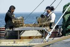 Jose Maldonado, left, and Pricilla Layana, right, sort oysters on board a boat in the Long Island Sound as they dredge them for Norm Bloom and Son in Norwalk, Conn., on Friday, May 17, 2013.