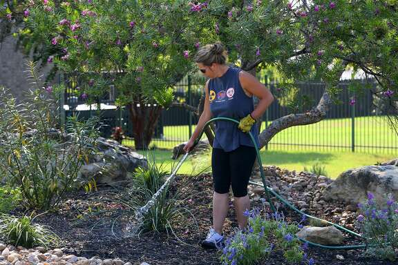 Valerie Roderick waters some recently planted shrubs Aug. 28, 2015 in her front yard on San Antonio's North Side in the Arbor subdivision. Water restrictions have begun again in San Antonio.