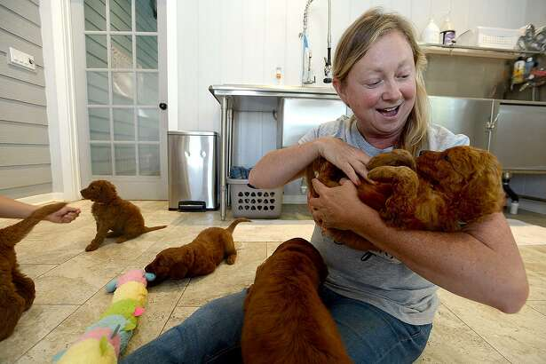 Owner Stacy Allison works on trust-building activities with the Golden Doodle puppies at Texas Doodles breeding facility in Kountze. Thursday, June 14, 2018 Kim Brent/The Enterprise