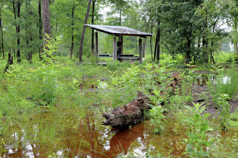 A new field station serves as a viewing platform for the restored prairie environment of the Houston Arboretum. Photo: Craig Moseley, Staff / Chronicle / ©2018 Houston Chronicle