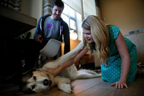 Alison Ettel, CEO and founder of TreatWell, pets Kyra as her owner looks on during a consultation in San Francisco, California, on Sunday, Oct. 18, 2015. Photo: Connor Radnovich / The Chronicle 2015