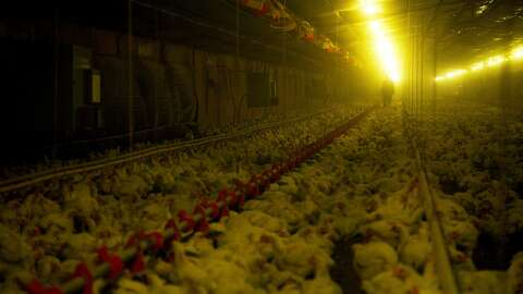 Eating Animals' review: Thoughtful, provocative documentary