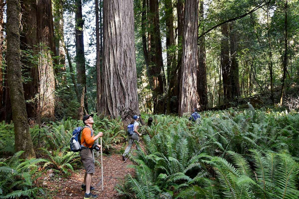 Writer Robert Earle Howells stops during a hike through the Tall Trees Grove in Redwood National Park during a hike to the Hyperion tree.