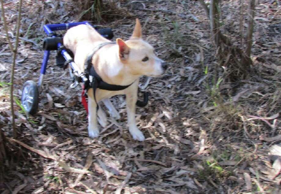 Pets Remembered: Kiku