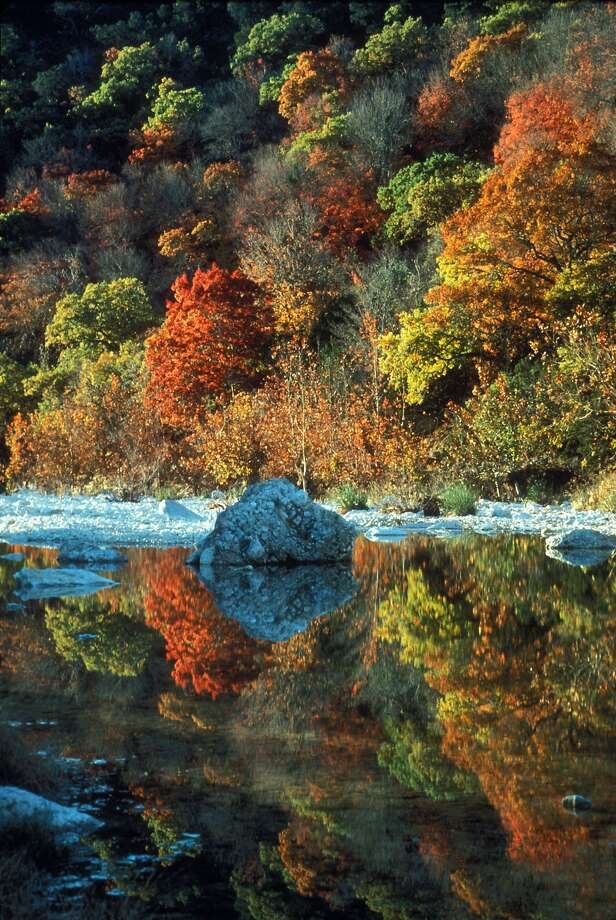Amazing Texas fall foliageTexas-favorite Lost Maples State Natural Area is celebrating its 40th anniversary.>>> 14 things to know about the park... Photo: Leroy Williams, Texas Parks And Wildlife