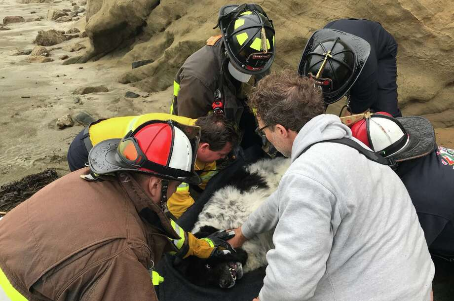 The San Francisco Fire Department was called to Fort Funston when a sheepdog fell more than 150 feet off a cliff. The dog was injured but is expected to live. Photo: San Francisco Fire Department