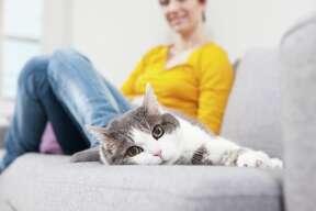 San Francisco: Renters seeking a cat-friendly unit: 9%. Properties offeringa cat-friendly unit: 39%.    Sacramento: Renters seekinga cat-friendly unit: 14%. Properties offeringa cat-friendly unit: 53%.    Seattle: Renters seeking a cat-friendly unit: 16%. Properties offering a cat-friendly unit: 65%.