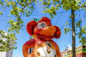 "For the Oakland A's 50th anniversary, the team unveiled ""Stomper in the Town,"" a public art show featuring 50 life-size statues of the Oakland Athletics' mascot displayed throughout the city."