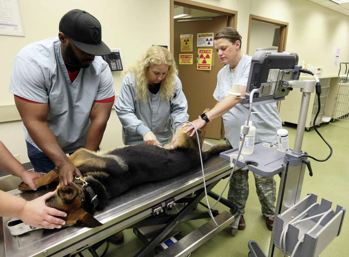 Jason Floyd, from left, Robyn Miller, and Maj. Catherine Burlison examine Robin the dog at the Lt. Col. Daniel E. Holland Memorial Military Working Dog Hospital on Joint Base San Antonio - Lackland.