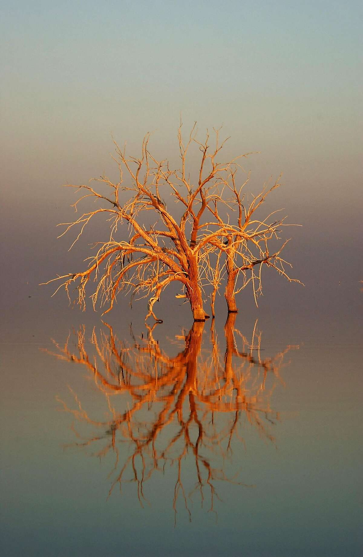 SALTON SEA, CA - JUNE 17: Trees flooded by the Salton Sea are illuminated by sunrise on June 17, 2003 in the Colorado Desert of southern California. The Salton Sea Authority is considering a plan to shrink the salty 376-square-mile lake by capturing and desalting agricultural runoff that flows into the sea from Imperial Valley farms in an effort to reduce salinity and make the body of water more habitable to fish and birds along the Pacific flyway. Farmers would then reuse the treated water, and more Colorado River water would be made available for Southern California cities, according to the Metropolitan Water District. The Salton Sea area has long been entrenched in California's water wars and is one a major stop for migrating birds. (Photo by David McNew/Getty Images)