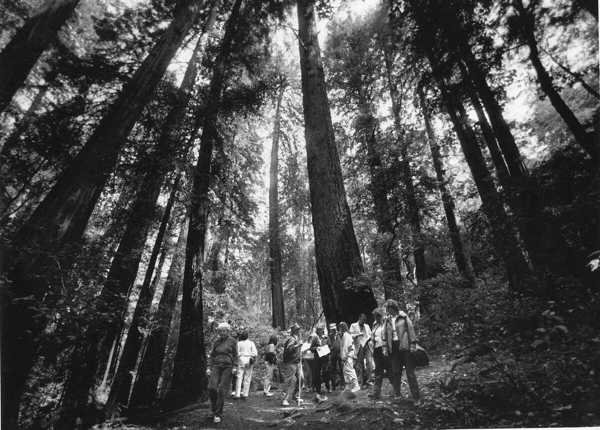 A group of hikers celebrating the birthday of John Muir at Muir Woods National Monument, April 21, 1988