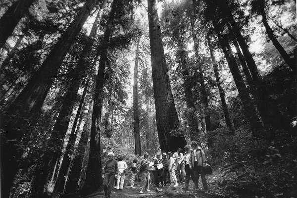 How One Couple Saved Muir Woods From Becoming A Dammed Reservoir