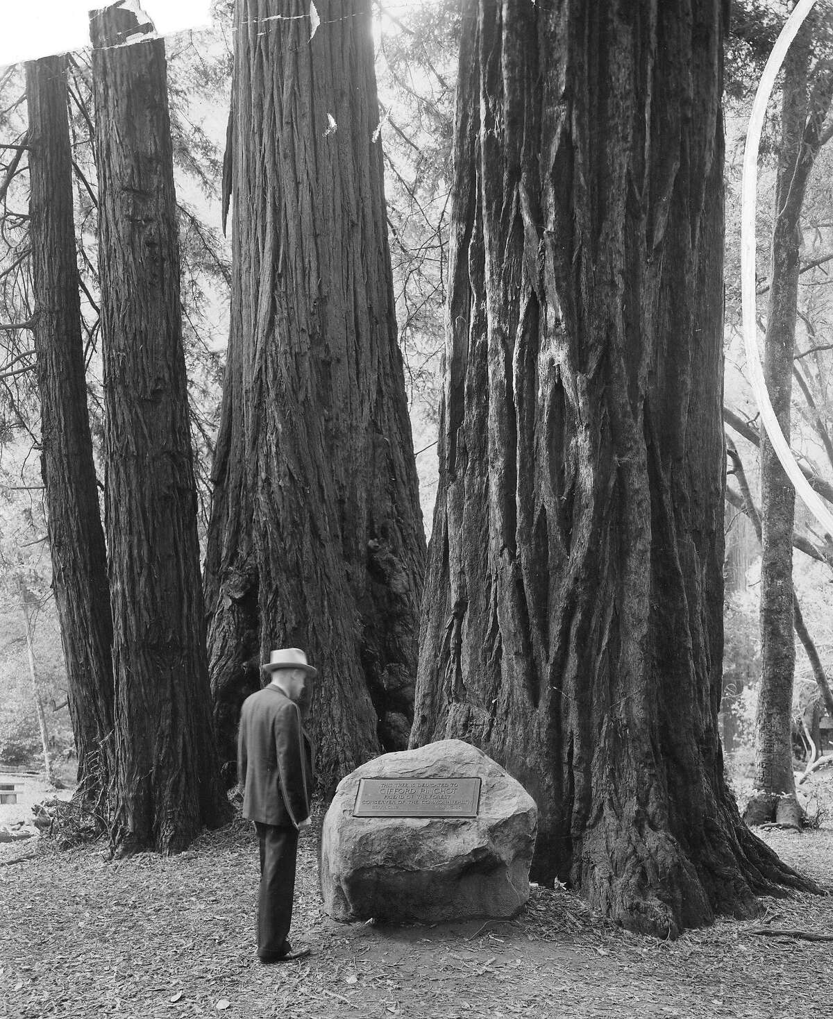 Muir Woods National Monument, Jan 8, 1939, as the toll road that goes to Muir Woods is soon to become a unit of the State highway system,allowing free access to and from the monument Handout photo